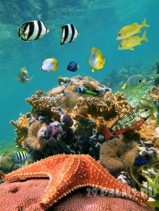 018_Starfish_with_school_of_tropical_fish_in_a_coral_reef_Caribbean_Foto_vilainecrevette_-_Depositphotos