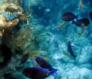 coralscene2