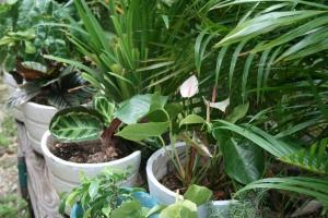 Pot plants.