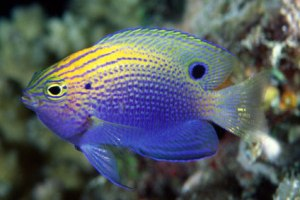 reefs-fish-survival-200