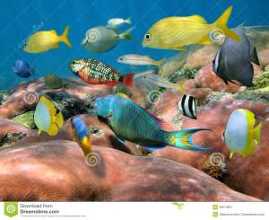 shoal-fish-over-coral-reef-26213601